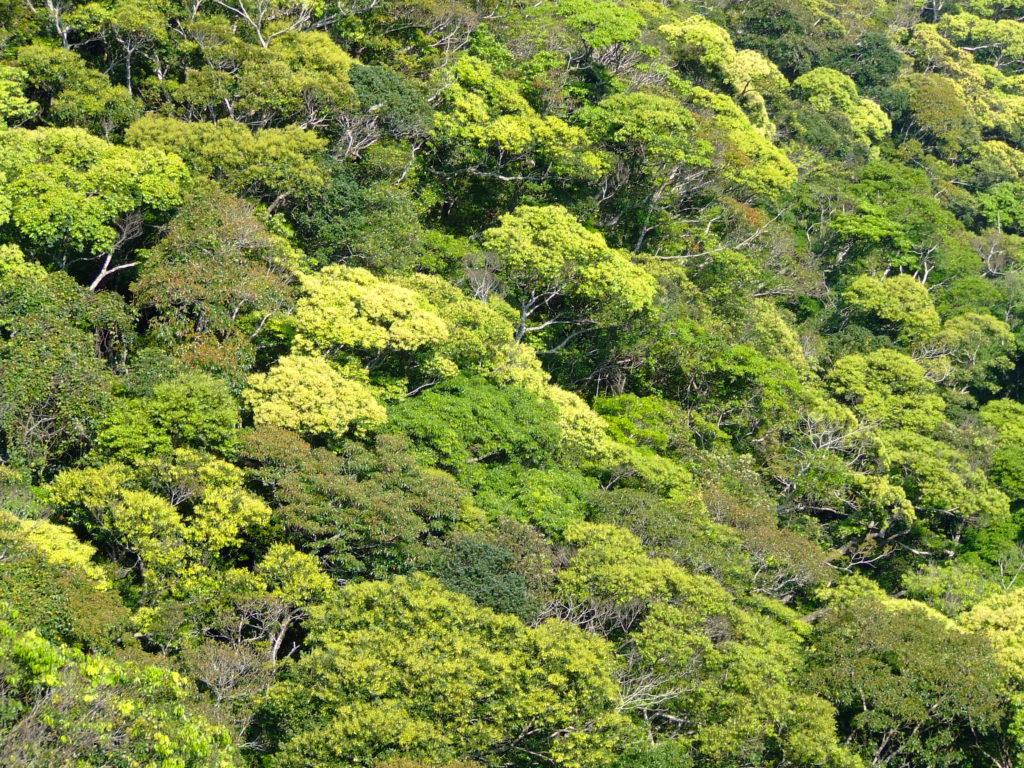 やんばるの森の景観